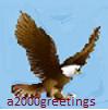 bald eagle majestic