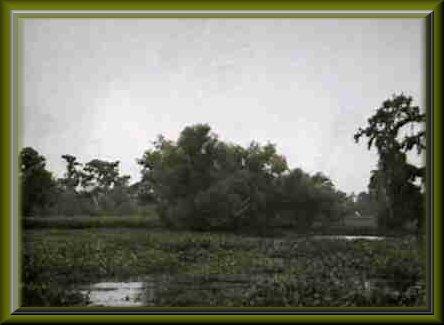 bayou to marsh